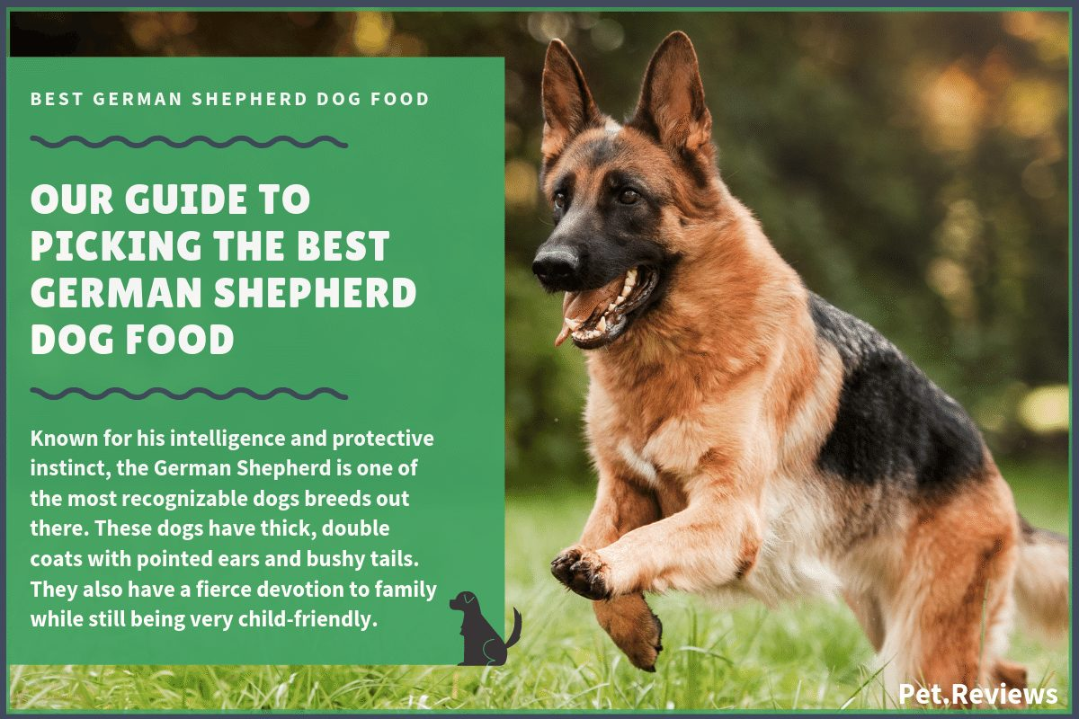 best dog food for german shepherd puppy 10 best dog foods for german shepherds gsd s in 2019 7590