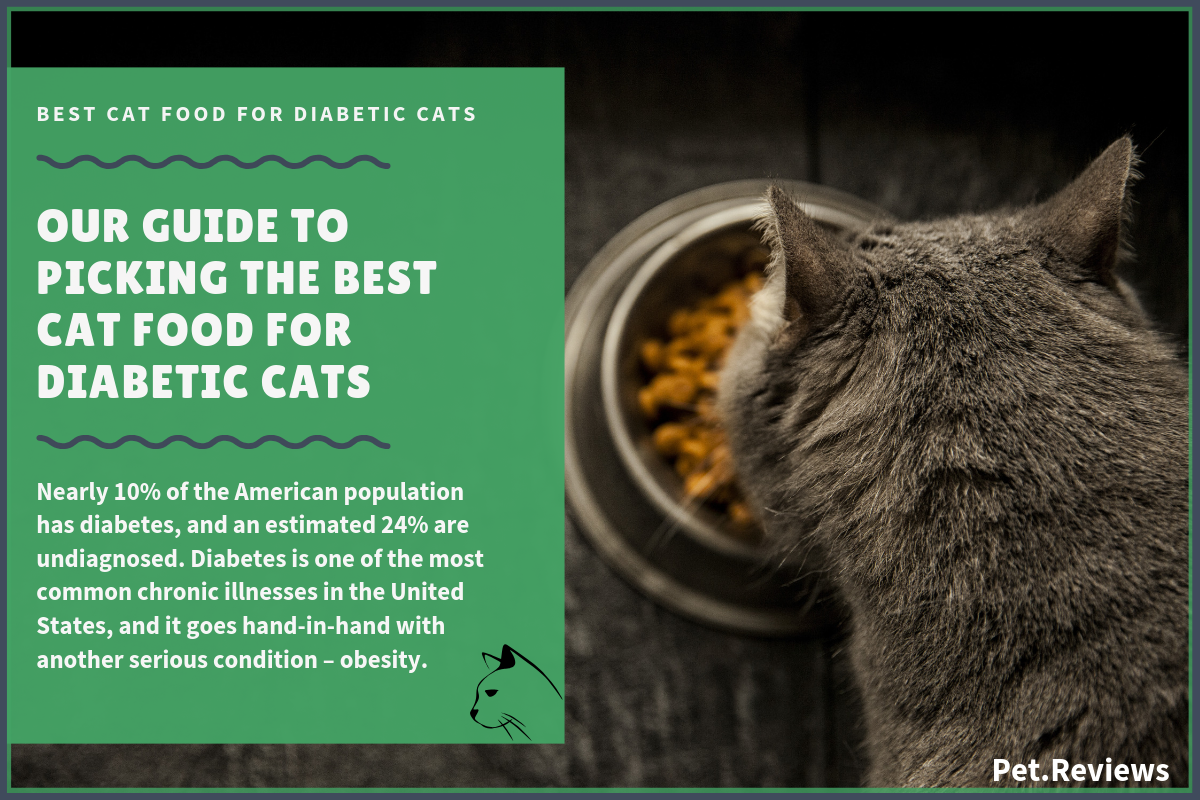 10 Best Cat Foods (Lower Carb) for