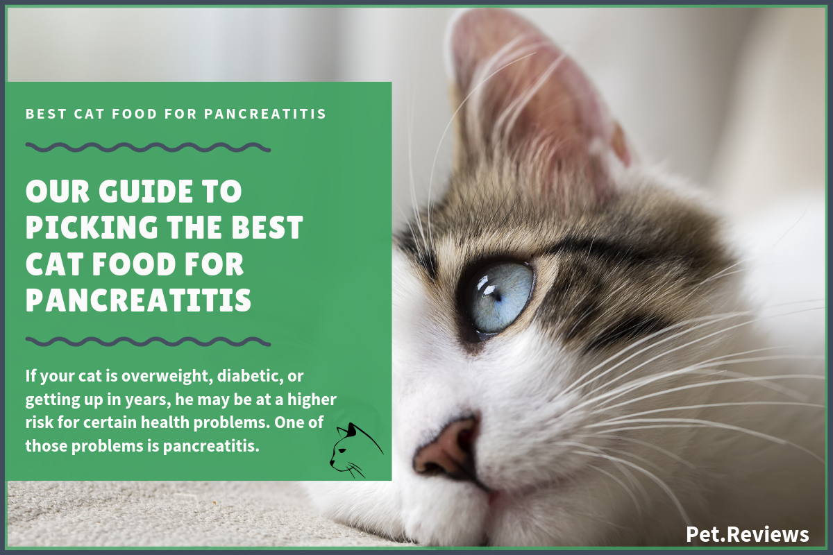 11 Best Cat Foods Wet Canned For Pancreatitis In 2020,Coin Dealers Near Me Open