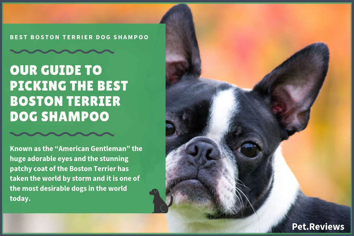 6 Best Dog Shampoos And Conditioners For Boston Terriers