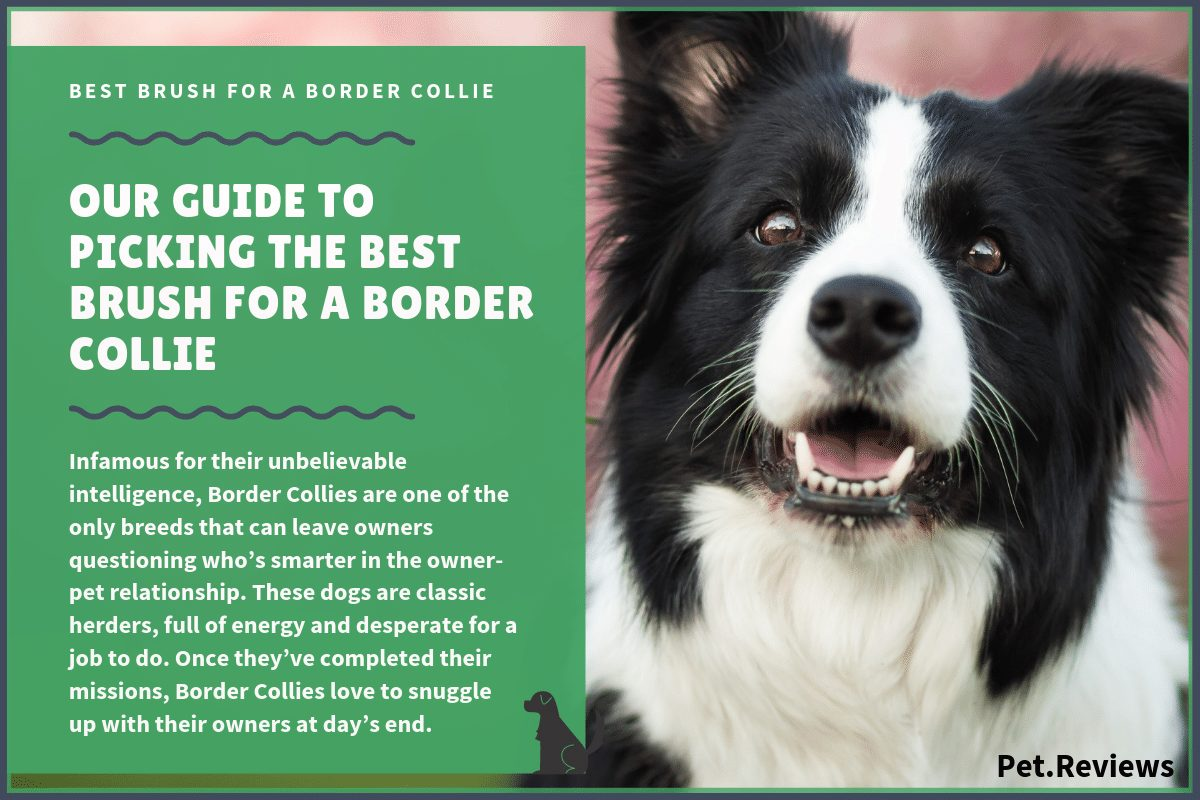 best brush for border collie
