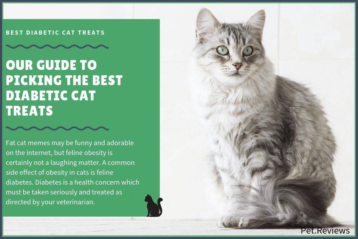 best diabetic cat treats